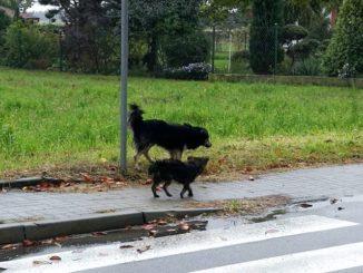 II - Trzymać psy w domu