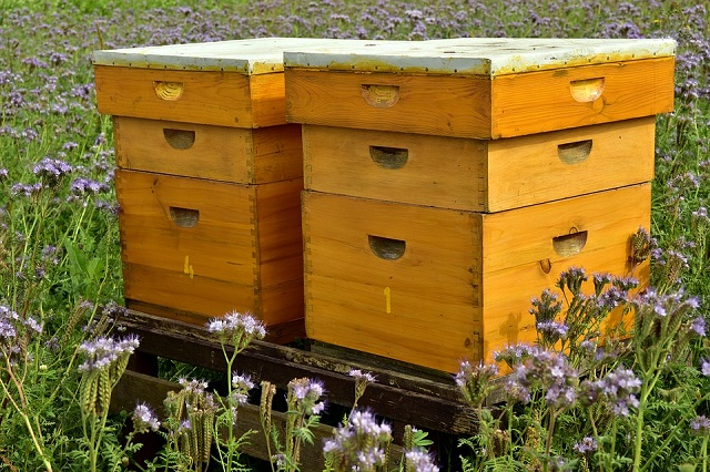 beehive-3703434_960_720
